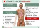 Ernia iatale sintomi