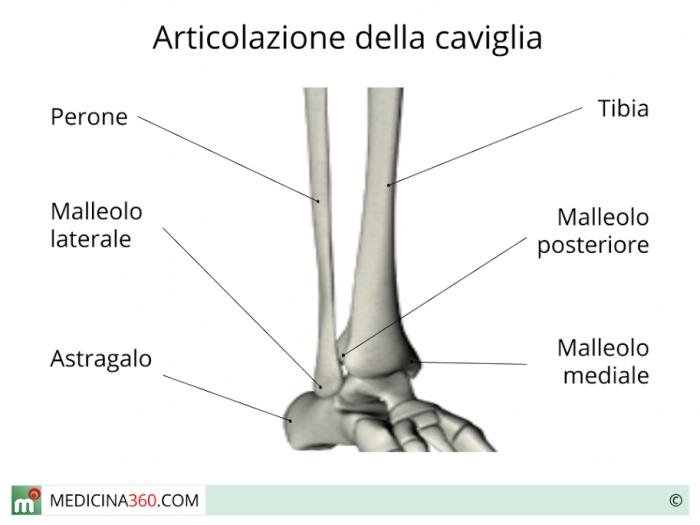 Anatomia della caviglia