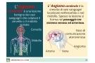 angioma cerebrale