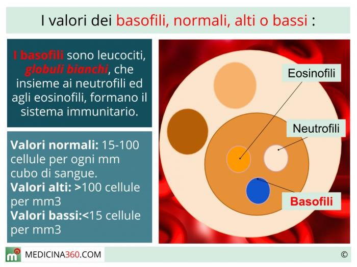 globuli bianchi elevati nellinfezione parassitaria