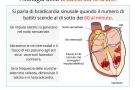 Bradicardia sinusale: cause, cura, rischi e tipi