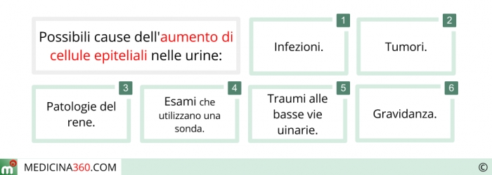 Cause dell'aumento di cellule epiteliali nelle urine