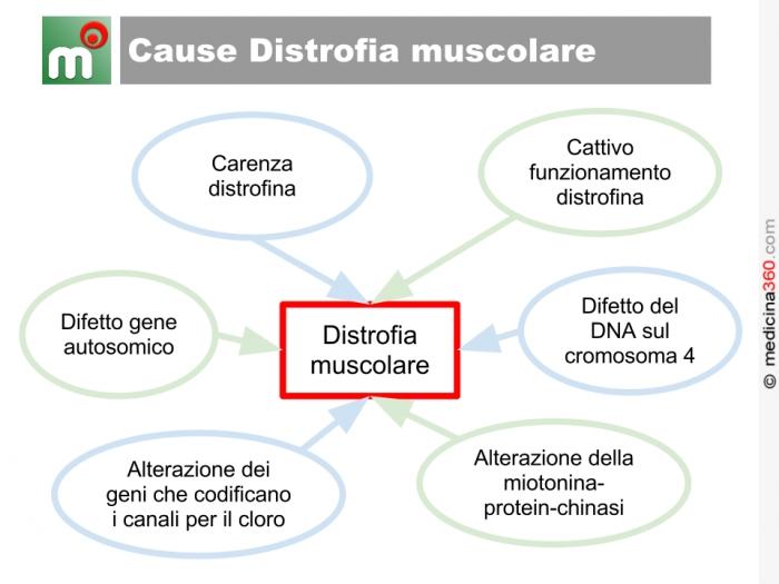 Cause distrofia muscolare
