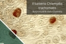 Clamidia: sintomi, terapia, contagio e rischi per l'uomo e la donna