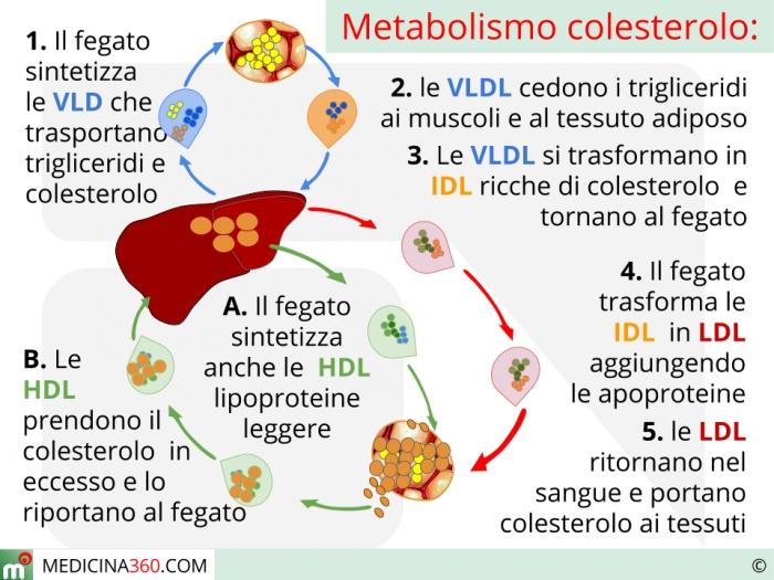 s colesterolo totale alto