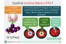 FT4 basso, FT4 alto e valori normali della tiroxina libera