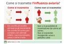 Influenza aviaria: virus, sintomi e prevenzione della malattia infettiva