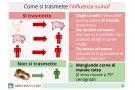 Influenza suina: sintomi, virus, terapia e prevenzione