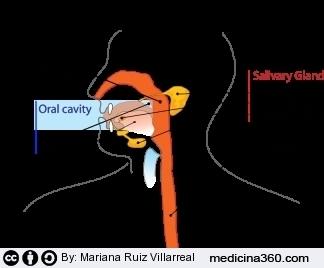 Ingrossamento ghiandole salivari