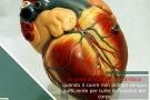 Insufficienza cardiaca acuta o cronica: sintomi, cause e terapia