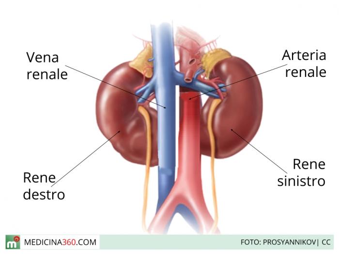 dieta per pazienti con reni in dialisine