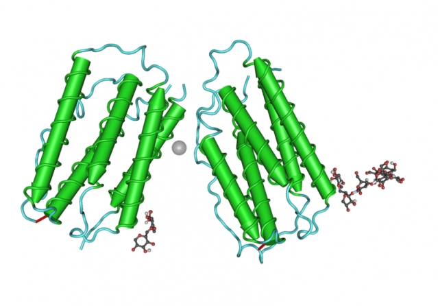 Interferone per sclerosi multipla: meccanismo d'azione ed effetti collaterali