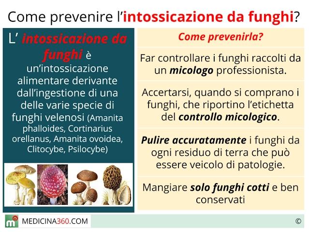 Intossicazione da funghi: sintomi, terapia e conseguenze