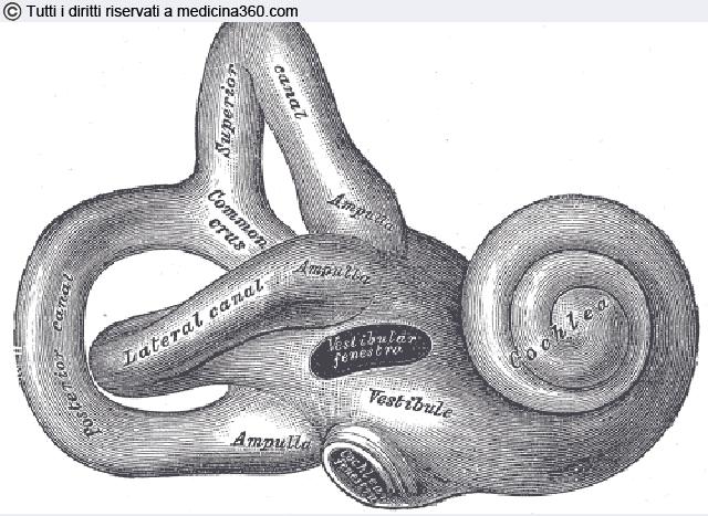Labirintite: sintomi, cause, diagnosi e cura per la fase acuta o cronica