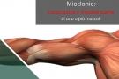 Mioclonie o spasmi muscolari. Le cause delle contrazioni involontarie