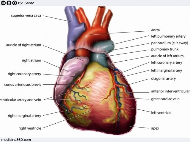 soffio al cuore sintomi