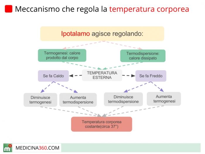 Meccanismo della temperatura corporea