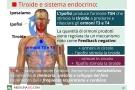 Tiroide: cos'è?  funzioni, malattie, esami ed  analisi dei valori