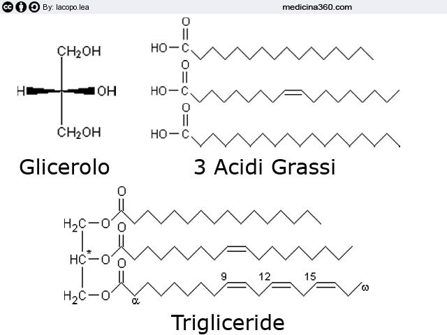 Cosa sono i trigliceridi